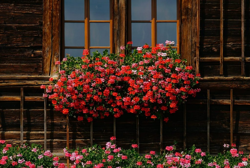 Best Flowers for Your Balcony or Home Garden